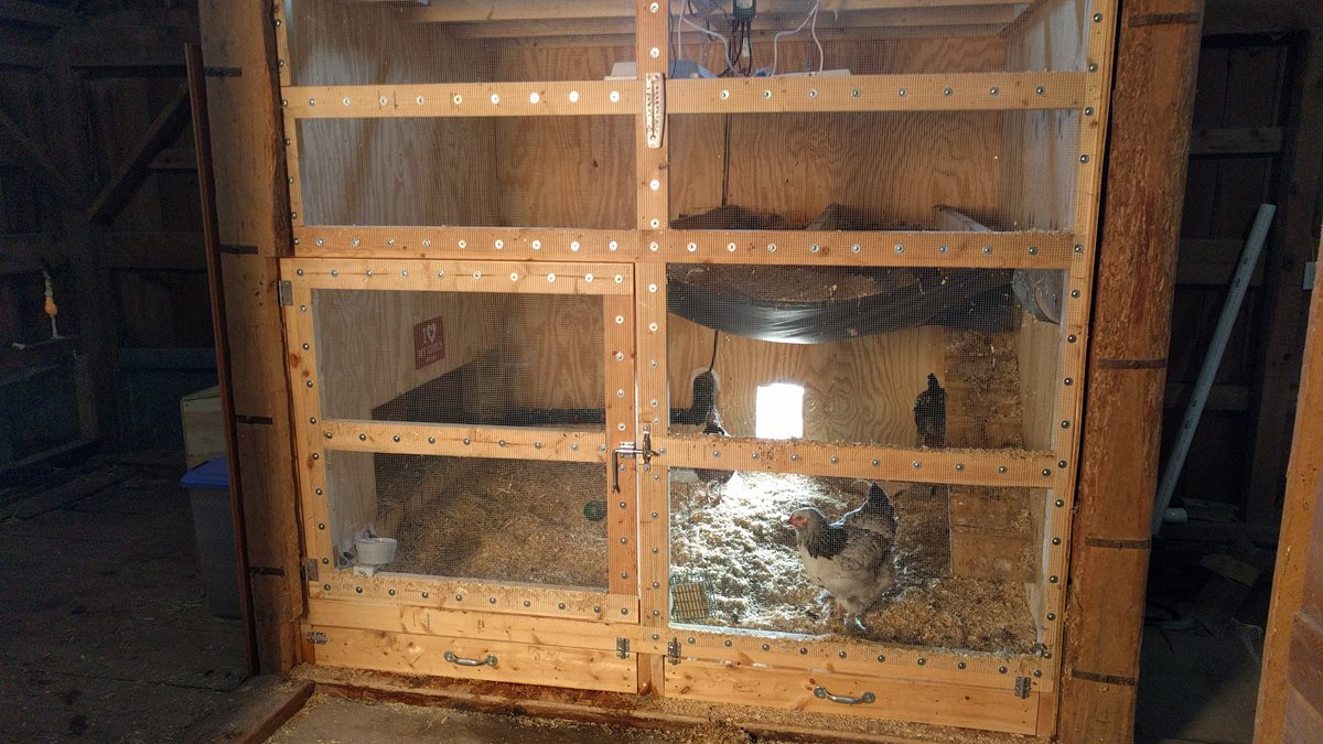The Taj Mahal of Chicken Coops
